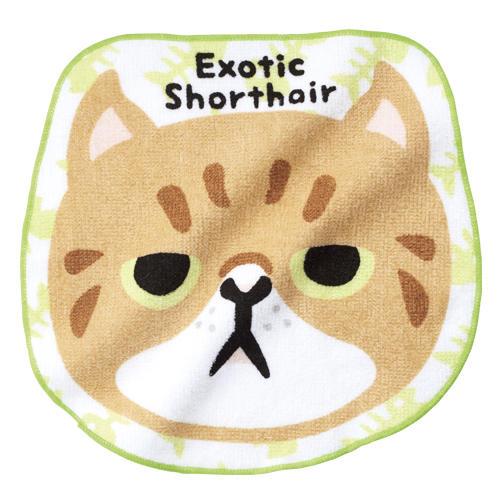 エキゾチックショートヘア