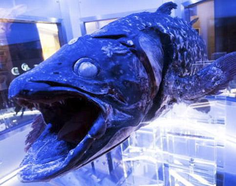 力匠部屋~「深海魚」