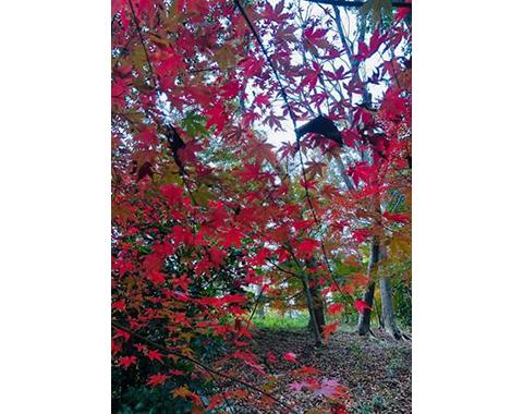 力匠部屋~「秋で癒される」