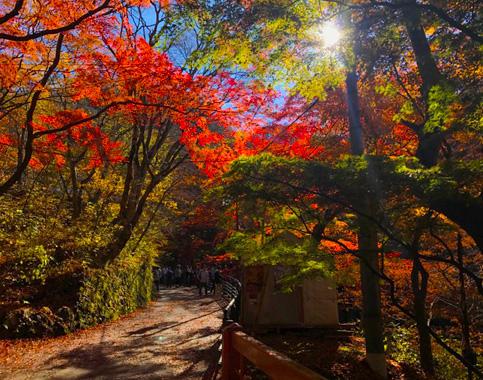 力匠部屋~「秋の伊香保旅行」
