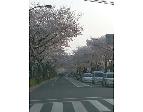 力匠部屋~「桜と「桜ヶ丘」」